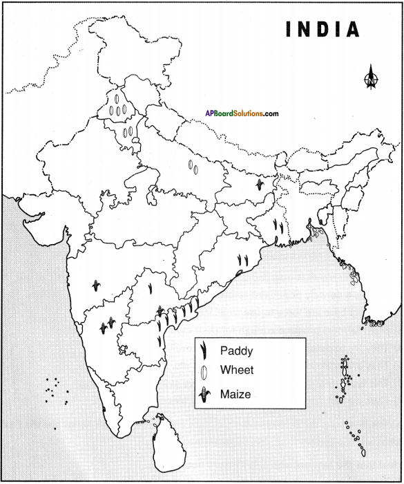 AP Board 9th Class Social Studies Important Questions Chapter 6 Agriculture in India 12