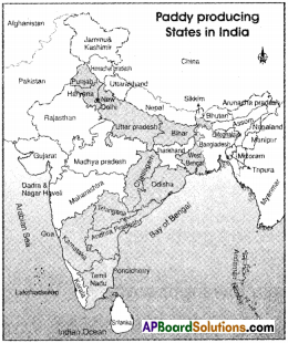 AP Board 9th Class Social Studies Important Questions Chapter 6 Agriculture in India 2