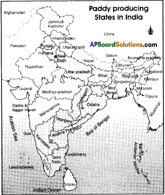 AP Board 9th Class Social Studies Solutions Chapter 6 Agriculture in India 3