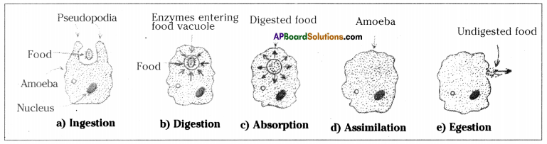 AP SSC 10th Class Biology Important Questions Chapter 1 Nutrition 22