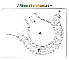 AP SSC 10th Class Biology Important Questions Chapter 2 Respiration 6