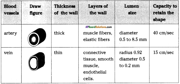AP SSC 10th Class Biology Important Questions Chapter 3 Transportation 10