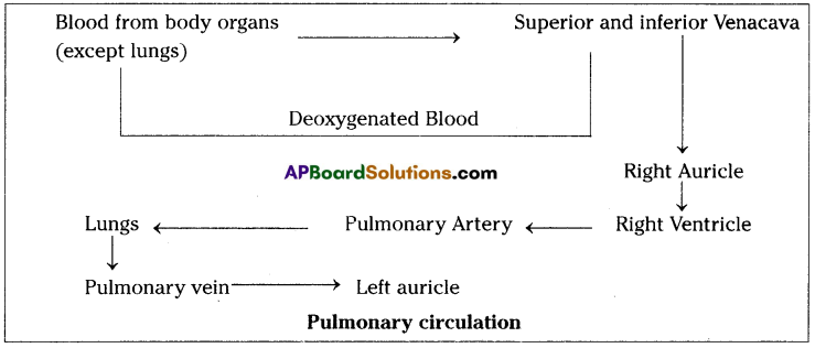 AP SSC 10th Class Biology Important Questions Chapter 3 Transportation 8