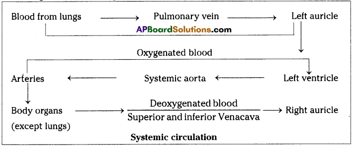AP SSC 10th Class Biology Important Questions Chapter 3 Transportation 9