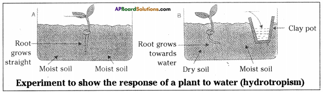 AP SSC 10th Class Biology Important Questions Chapter 5 Coordination 13