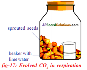 AP SSC 10th Class Biology Solutions Chapter 2 Respiration - The Energy Releasing System 18