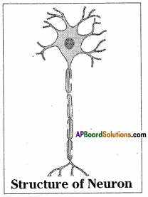 AP SSC 10th Class Biology Solutions Chapter 5 Coordination – The Linking System 15