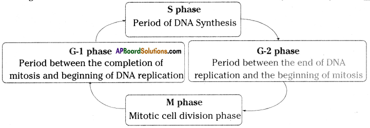 AP SSC 10th Class Biology Solutions Chapter 6 Reproduction - The Generating System 5