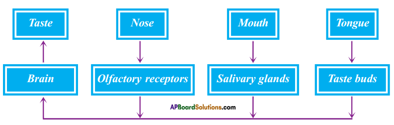 AP SSC 10th Class Biology Solutions Chapter 7 Coordination in Life Processes 4