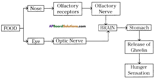 AP SSC 10th Class Biology Solutions Chapter 7 Coordination in Life Processes 7