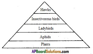 AP SSC 10th Class Biology Solutions Chapter 9 Our Environment 2