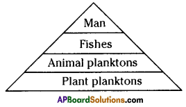 AP SSC 10th Class Biology Solutions Chapter 9 Our Environment 7