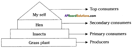 AP SSC 10th Class Biology Solutions Chapter 9 Our Environment 8