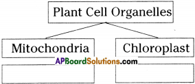 AP Board 9th Class Biology Important Questions Chapter 1 Cell its Structure and Functions Important Questions 12