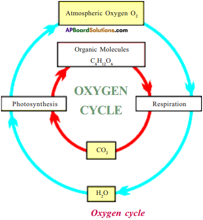 AP Board 9th Class Biology Important Questions Chapter 11 Bio Geo Chemical Cycles 3