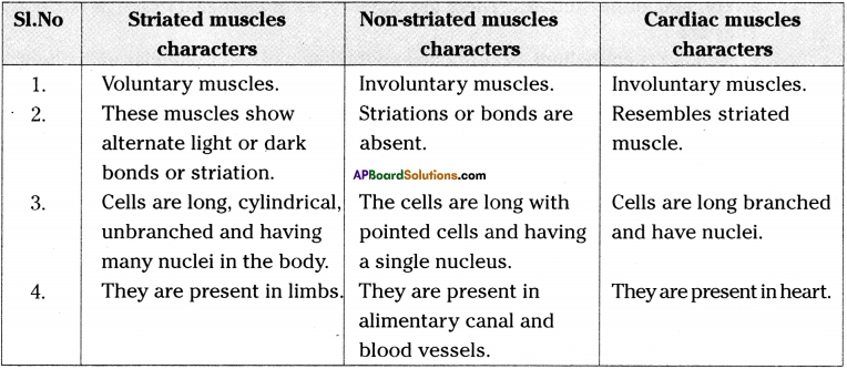 AP Board 9th Class Biology Important Questions Chapter 3 Animal Tissues 6