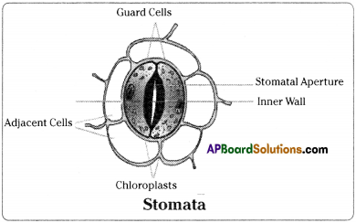 AP Board 9th Class Biology Solutions Chapter 1 Cell its Structure and Functions 2