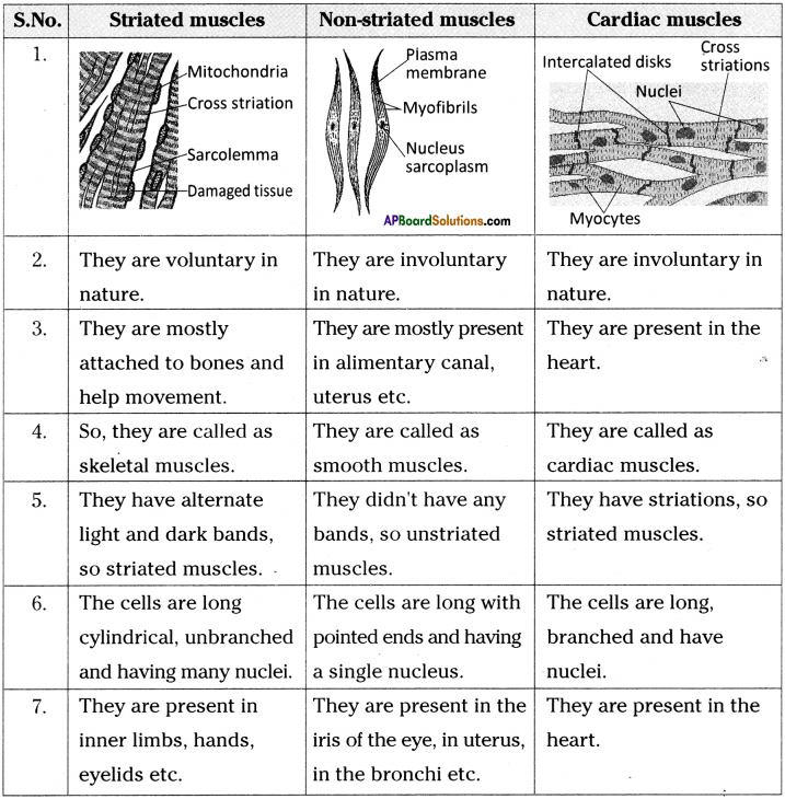 AP Board 9th Class Biology Solutions Chapter 3 Animal Tissues 1