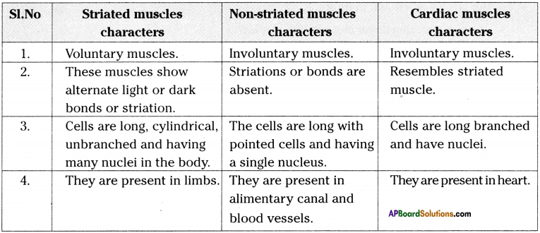 AP Board 9th Class Biology Solutions Chapter 3 Animal Tissues 11
