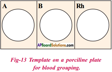 AP Board 9th Class Biology Solutions Chapter 3 Animal Tissues 8
