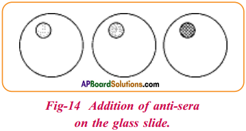 AP Board 9th Class Biology Solutions Chapter 3 Animal Tissues 9