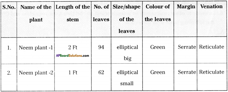 AP Board 9th Class Biology Solutions Chapter 5 Diversity in Living Organism 11