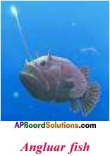 AP Board 9th Class Biology Solutions Chapter 9 Adaptations in Different Ecosystems 3