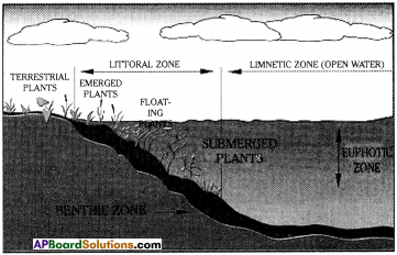 AP Board 9th Class Biology Solutions Chapter 9 Adaptations in Different Ecosystems 6
