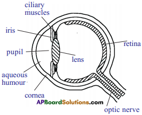 AP SSC 10th Class Physics Important Questions Chapter 7 Human Eye and Colourful World 20