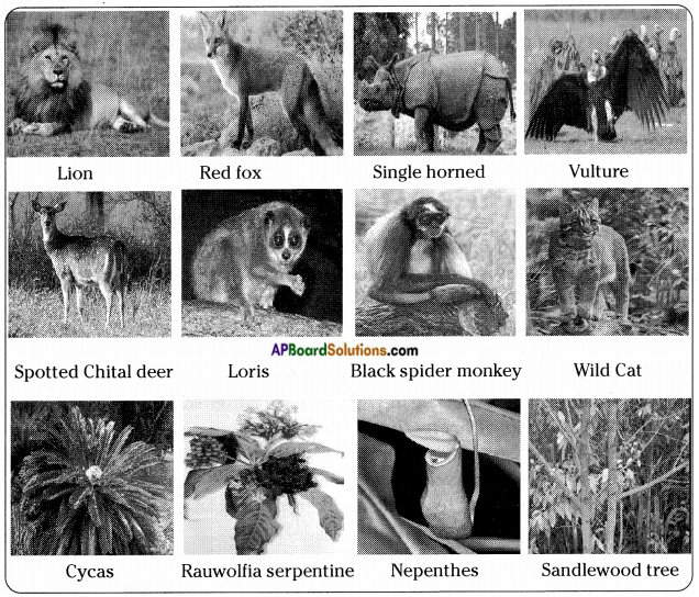 AP Board 8th Class Biology Important Questions Chapter 6 Biodiversity and its Conservation 1