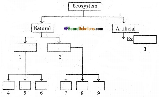 AP Board 8th Class Biology Important Questions Chapter 7 Different Ecosystems 1
