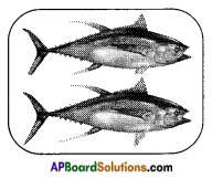 AP Board 8th Class Biology Important Questions Chapter 9 Production and Management of Food From Animals 1