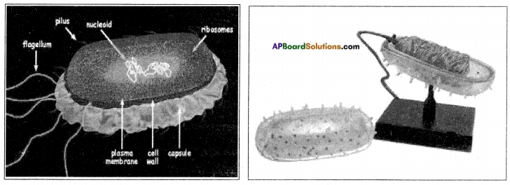 AP Board 8th Class Biology Solutions Chapter 3 Story of Microorganisms I 5