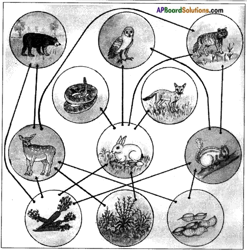 AP Board 8th Class Biology Solutions Chapter 7 Different Ecosystems 2