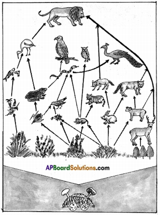 AP Board 8th Class Biology Solutions Chapter 7 Different Ecosystems 4
