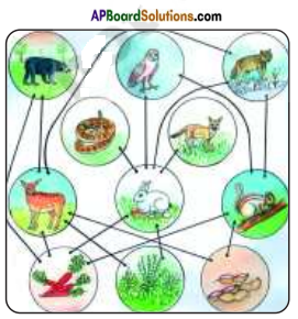 AP Board 8th Class Biology Solutions Chapter 7 Different Ecosystems 6