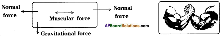 AP Board 8th Class Physical Science Solutions Chapter 1 Force 10