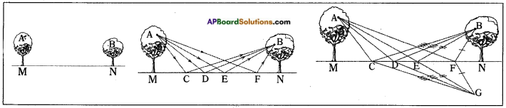 AP Board 8th Class Physical Science Solutions Chapter 10 Reflection of Light at Plane Surfaces 13