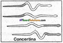 AP Board 6th Class Science Important Questions Chapter 12 Movement and Locomotion 11