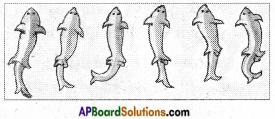 AP Board 6th Class Science Important Questions Chapter 12 Movement and Locomotion 14