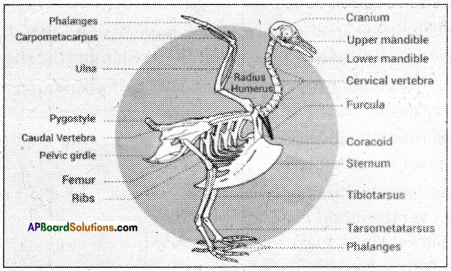 AP Board 6th Class Science Important Questions Chapter 12 Movement and Locomotion 15