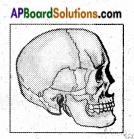 AP Board 6th Class Science Important Questions Chapter 12 Movement and Locomotion 8