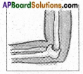 AP Board 6th Class Science Solutions Chapter 12 Movement and Locomotion 2
