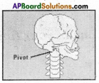 AP Board 6th Class Science Solutions Chapter 12 Movement and Locomotion 4