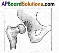 AP Board 6th Class Science Solutions Chapter 12 Movement and Locomotion 5