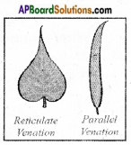 AP Board 6th Class Science Solutions Chapter 2 Knowing About Plants 12