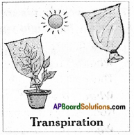 AP Board 6th Class Science Solutions Chapter 2 Knowing About Plants 14