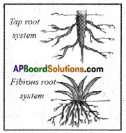AP Board 6th Class Science Solutions Chapter 2 Knowing About Plants 3