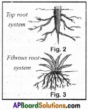 AP Board 6th Class Science Solutions Chapter 2 Knowing About Plants 7