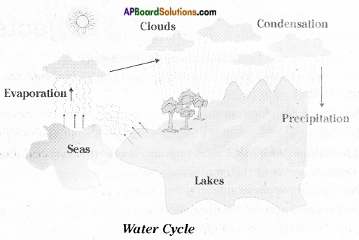 AP Board 6th Class Science Solutions Chapter 4 Water 1